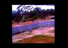 Australia Post Throwing Parcels to the Dogs!