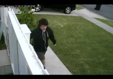 UPS Throws Package Over Fence Just Because